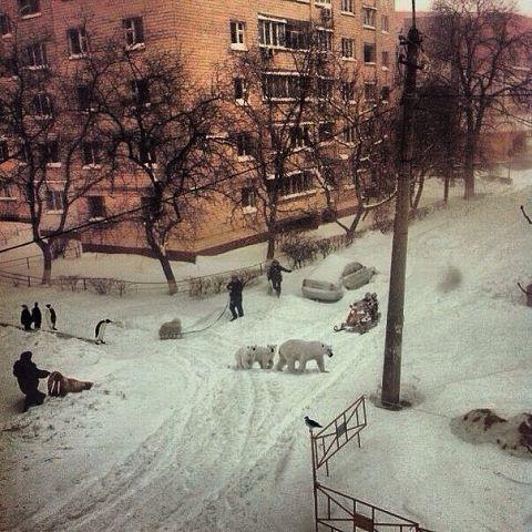 Прикольная картинка снег в апреле, что делать байкале