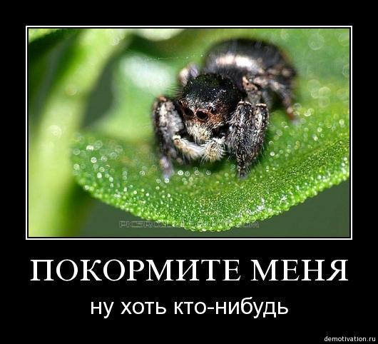post-17260-1236794839_thumb.jpg