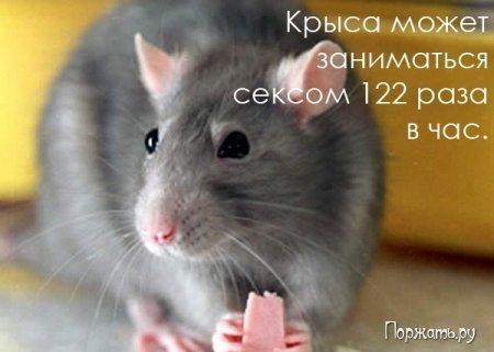 post-12477-1269082757_thumb.jpg