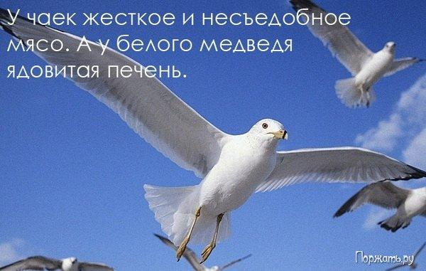 post-12477-1269082831_thumb.jpg
