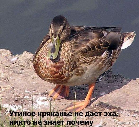 post-12477-1269082917_thumb.jpg