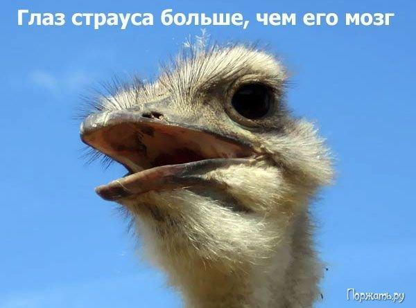 post-12477-1269082972_thumb.jpg