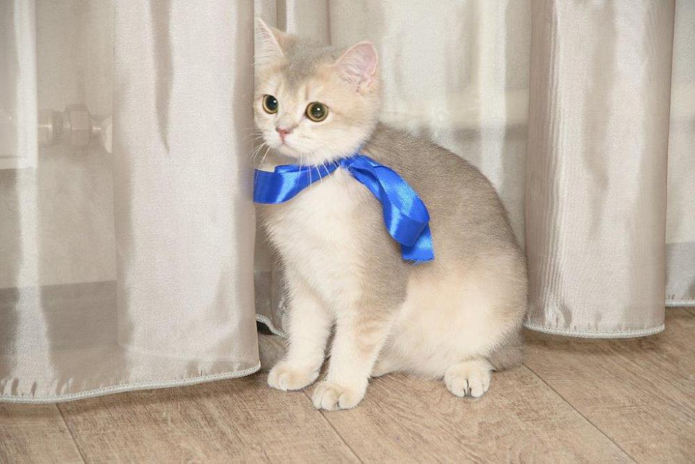 вкб новостройки дарит кота вместе с квартирой.jpg