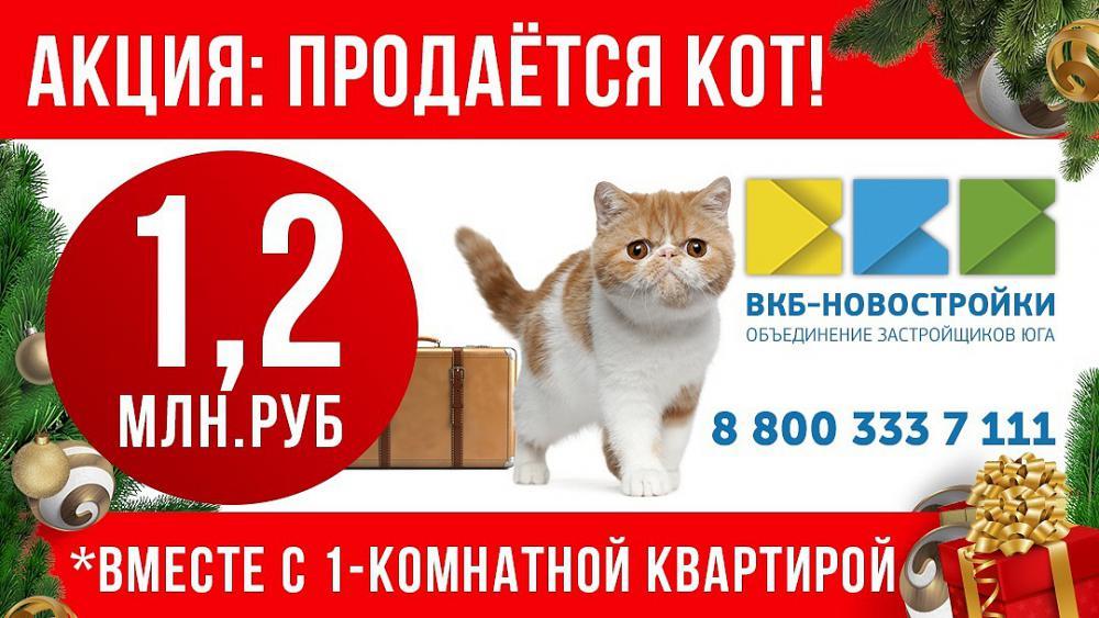 продается кот вместе с квартирой.jpg
