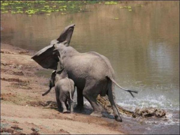 1294131280_elephant_vs_crocodile_03.jpg